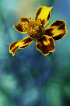 Free Flower Of The Sea Stock Images - 16879604