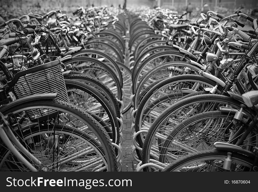 Bicycles parked in rows.