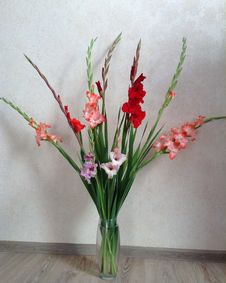Free Bouquet Of Flowers, Gladiolus Of Different Colors Royalty Free Stock Photo - 168704365