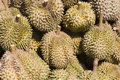 Free Durians Royalty Free Stock Image - 16881396
