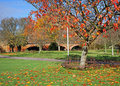 Free Autumn Colors In An English Park Royalty Free Stock Images - 16886289