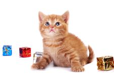 Free A Red Kitten Royalty Free Stock Image - 16882556
