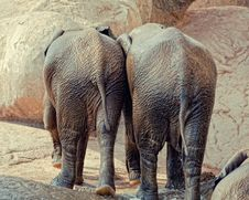 Free Elephants Stock Photography - 16882602