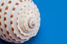 Free Sea Shell. Stock Photo - 16884050