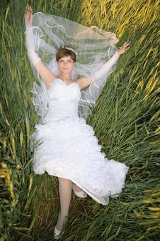 Free Bride In A Green Wheat Royalty Free Stock Images - 16886299