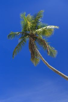 Free Palm Tree Stock Photography - 16889592