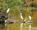 Free Three Herons Stock Image - 16898571