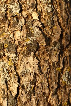 Free Lichen On Bark Stock Image - 16891051