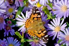 Free Butterfly Royalty Free Stock Photos - 16892708