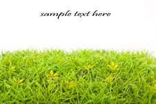 Free Grass On White Royalty Free Stock Photography - 16893087