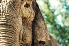 Free Elephant Stock Photos - 16893213
