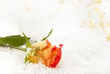 Free Rose On The Snow Royalty Free Stock Photography - 16893437