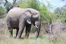 Free Elephant Stock Photos - 16894223
