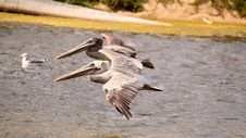 Free Synchronous Pelicans Stock Photography - 16894782