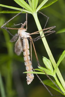 Free Daddy Longlegs Stock Photo - 16896490