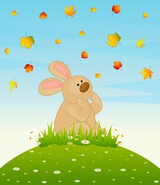 Free Bunny With Autumnal Leaves Stock Photos - 16896553