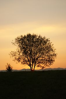 Free Tree Silhouette Stock Images - 16896704