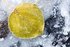 Free Leaf Of A Tree In The Ice Stock Photography - 16897272