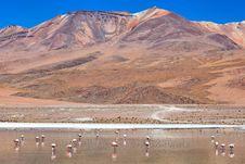 Free Laguna Celeste, Bolivia Stock Images - 16897314