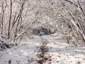 Free Forest Road In Winter Royalty Free Stock Photography - 1693197