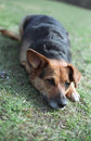 Free Dog On The Grass Royalty Free Stock Photos - 1698988