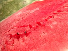 Free Juicy Watermelon Fresh Royalty Free Stock Photos - 1691808