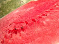 Juicy Watermelon Fresh Royalty Free Stock Photos