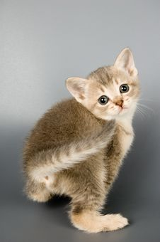 Free Kitten Whom The First Time Poses Royalty Free Stock Images - 1692619