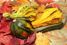 Free Pumpkins Stock Images - 1693884