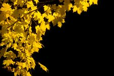 Free Yellow Leaves Royalty Free Stock Images - 1696899