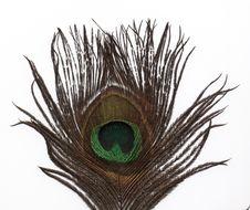 Free Peacock Feather Stock Photos - 1697983