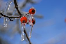 Free Snow And Ice Storm Royalty Free Stock Photography - 1698607