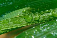 Free Rain On Guinea Grass 31 Stock Images - 1699204