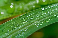 Free Rain On Guinea Grass 31 Stock Photo - 1699230