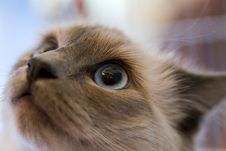 Free Cat Stock Images - 1699844