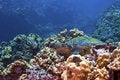 Free Green Sea Turtle Stock Photos - 16900433