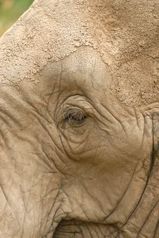 Free African Elephant Royalty Free Stock Photography - 16900817