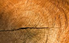 Free Texture Of Old Cracked Stump Wood Stock Photo - 16900940