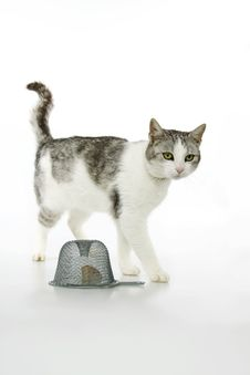 Free Cat Hunt Quarry Mice To The Traps. Stock Photo - 16901560
