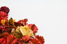 Free Potpourri In Lower Left Corner Stock Images - 16901984