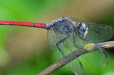 Free Colorful Dragonfly Stock Photography - 16902262