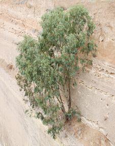 Tree On Wall. Stock Image