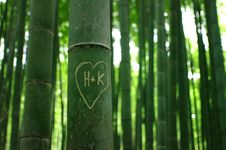 Free Bamboo Forest In Kyoto Royalty Free Stock Image - 16906336