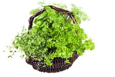 Free Basket Of Herbs Stock Photography - 16907132
