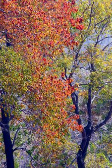 Free Autumn Color Royalty Free Stock Image - 16907136