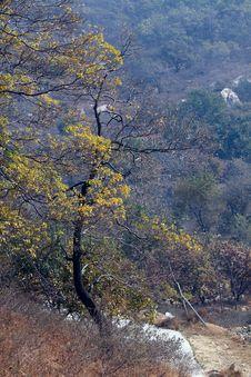 Free Autumn Tree Royalty Free Stock Photos - 16907248