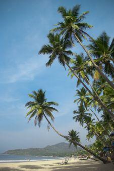 Free Tropical Beach Stock Photo - 16907660