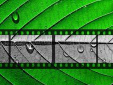 Free Monochrome Camera Film Stock Photos - 16908323