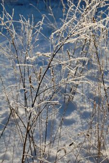 Free Hoarfrost On Branches Stock Photography - 16909772