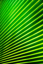 Free Palm Leaf Stock Photo - 16915830